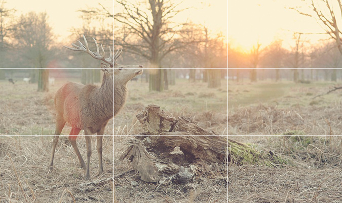 Rule Of Thirds Creates Better Images